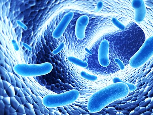 Pathogens Human And Animal Waste
